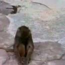 初めて鏡を見たお猿さんその反応とは