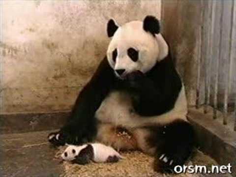 おもしろ動画パンダ