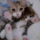 猫の親子はやっぱり似てる!! 猫の親子画像 7選
