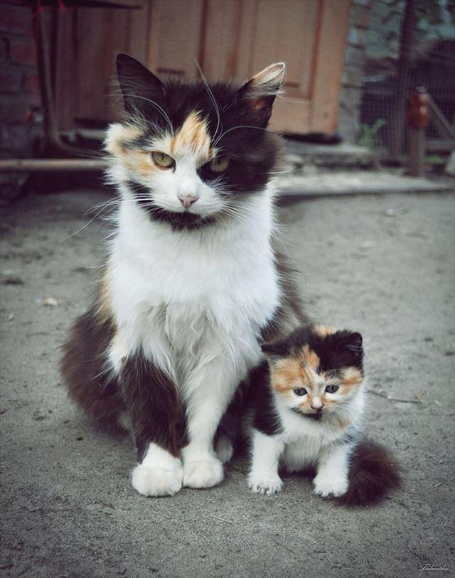 哀愁漂う猫の親子画像