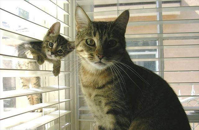 猫の親子画像