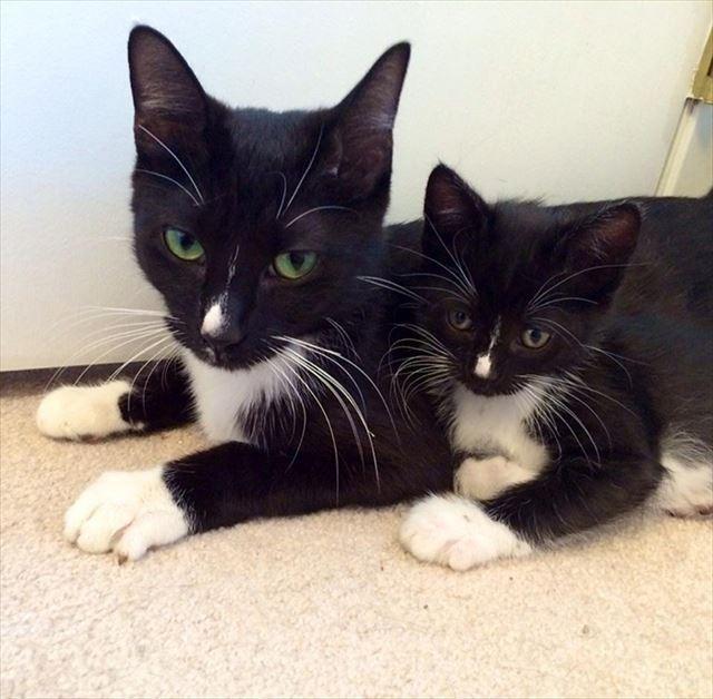 黒猫の親子画像