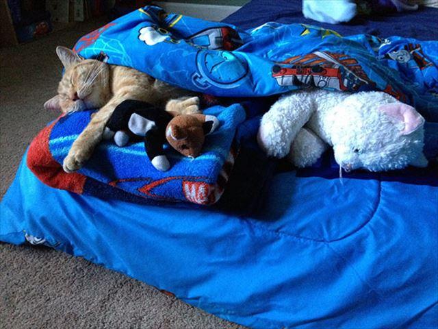 猫のお昼寝