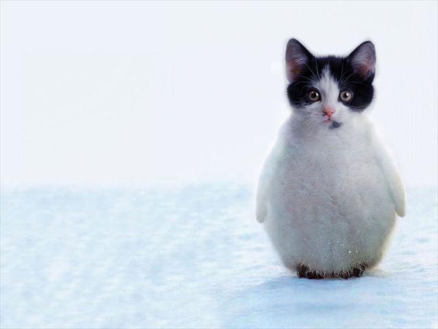 猫ペンギン