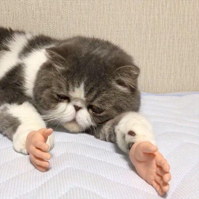 人間の手が生えた猫2