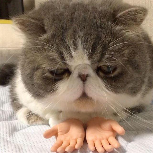 人間の手が生えた猫1