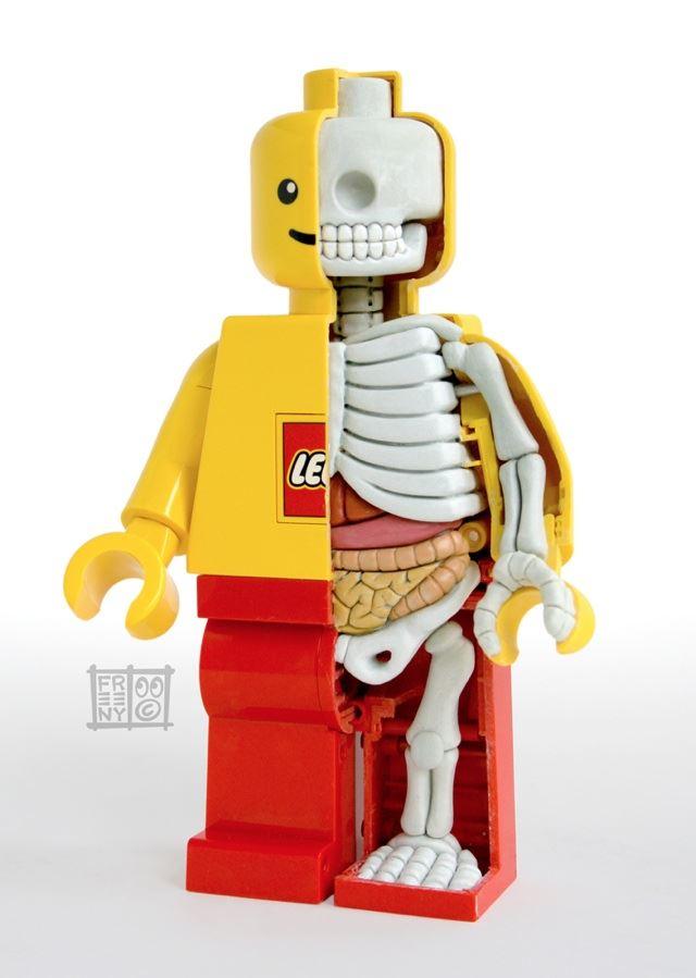 レゴのジャンボフィグの人体模型で解剖学を学ぶレゴフィギュア Lego anatomy