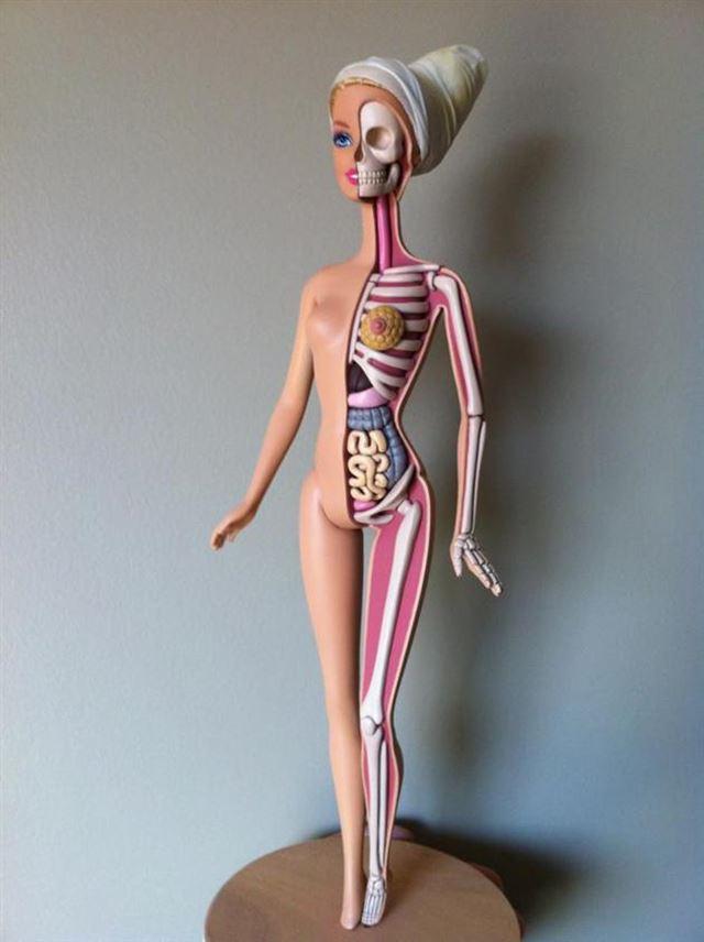 バービー人形の人体模型の全体