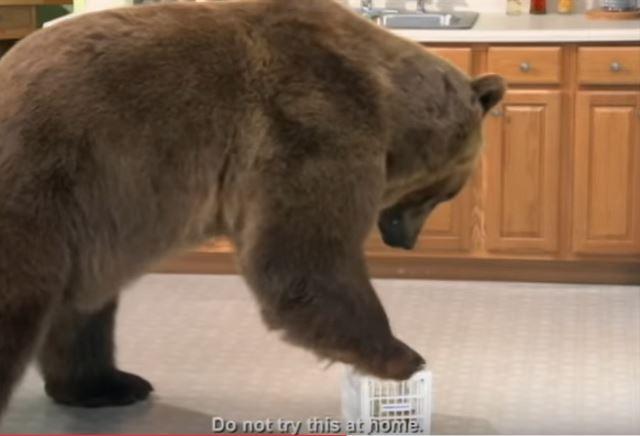 熊が乗っても壊れないフリッジロッカー