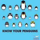 ペンギンの種類一覧をかわいいイラスト画像で紹介【世界ペンギンの日】