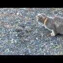 猫流ココ掘れニャンニャン、潜るやつは掘る