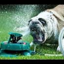 犬とスプリンクラーの飽くなき戦い