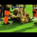 女子サッカーに乱入し全力で甘える犬