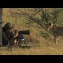 ライオン相手に根性を見せるカメラマン