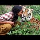 友達の虎に激しく襲われる男性